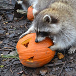 Halloween at the zoo!