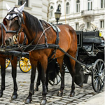 Romantic with Horse-Drawn Carriage Package