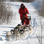 Introduction to Dogsledding Package