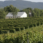 The wine tour Package