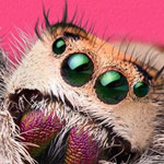 Spiders – From Fear to Fascination