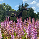 29 acres of themed gardens and mosaïcultures