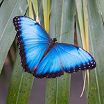 Visit of the Butterfly Pavilion and Petting Zoo