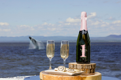 Croisières AML - VIP Lounge Whale-watching cruise Passport