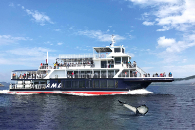 AML Cruises - Grand Fleuve Whale Cruise and Guided Cruise Passport
