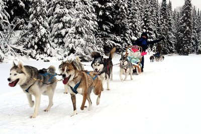 Aventure Quatre Saisons - 100% dogs Passport: dogsledding, canicross and sled dog show