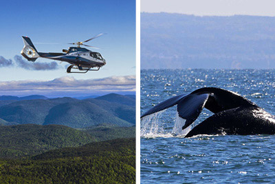 Croisières AML - Charlevoix whale-watching cruise and helicopter Passport