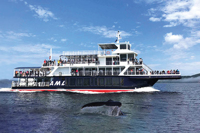 Croisières AML - Whale-watching cruise Passport