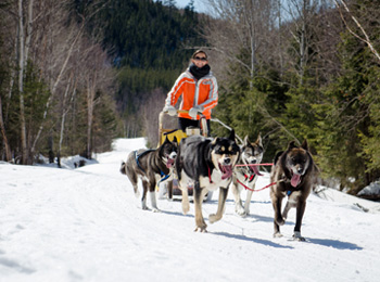 Dogsledding expedition