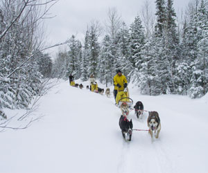 Join the team – go on a dogsledding expedition