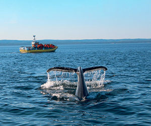 AML Cruises takes you out to see the whales