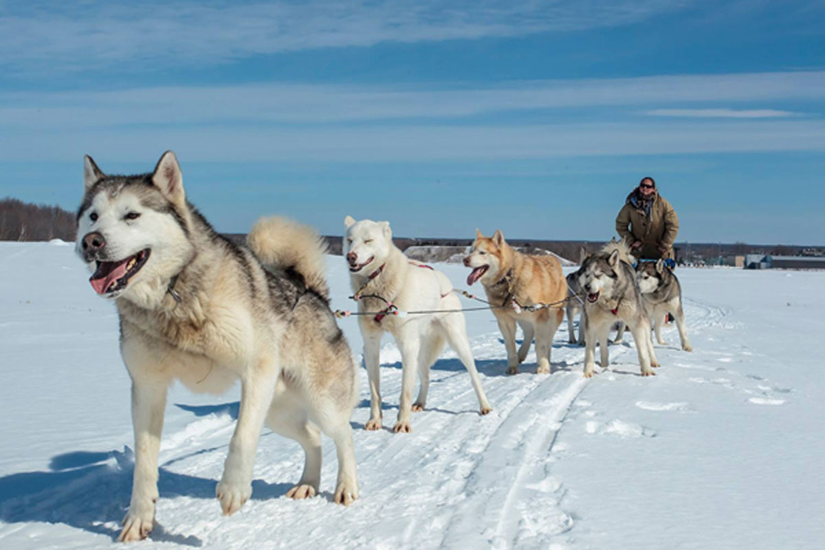 Where to go for an amazing dogsledding experience