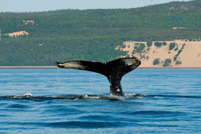 Did you know that the best place in the world to go whale-watching is in Quebec?