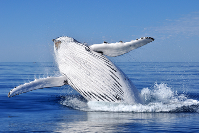 See the Whales on an Extraordinary Adventure