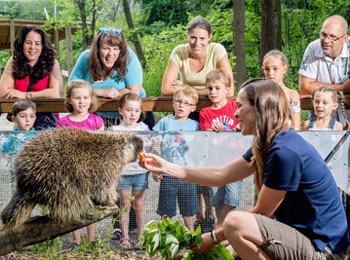 See local wildlife at the Ecomuseum Zoo