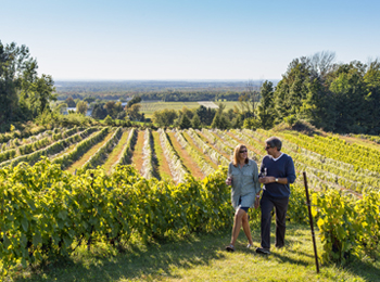 Stroll through the vineyard, photo credit: Mathieu Dupuis