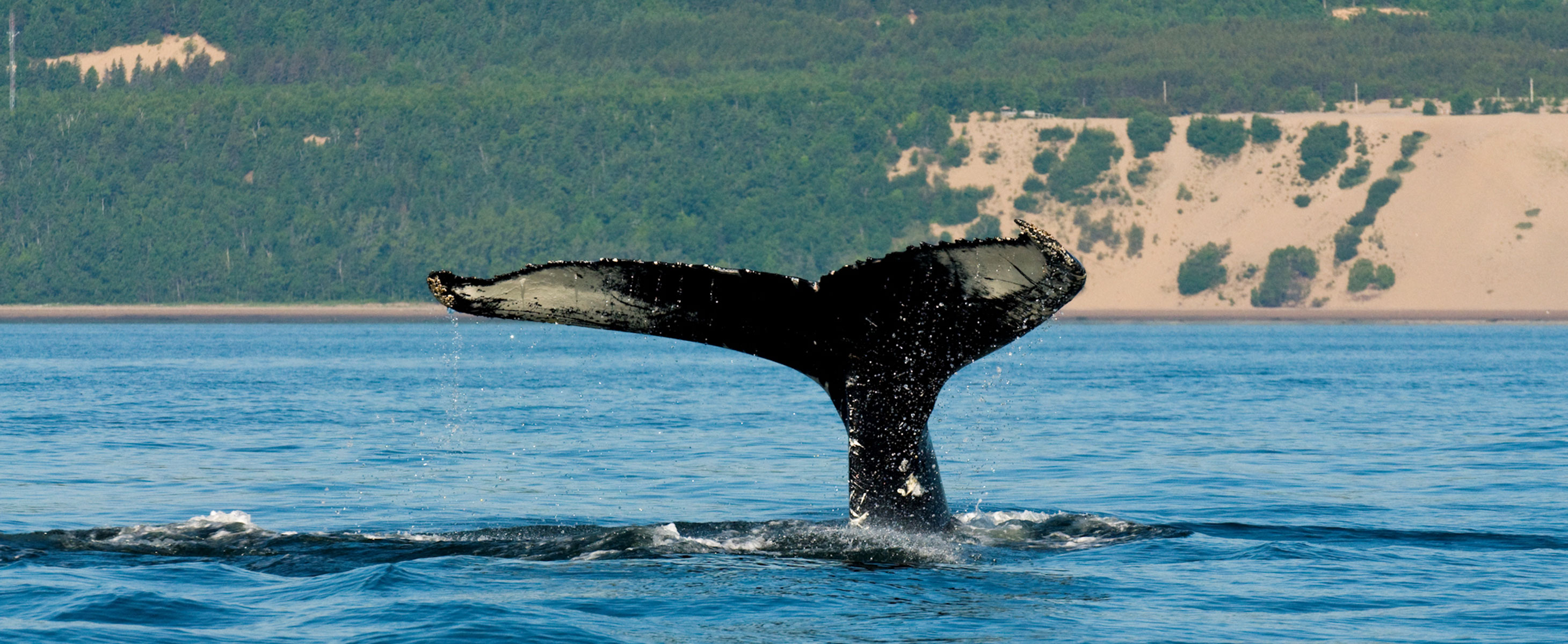 Whale-watching in Quebec's St. Lawrence River
