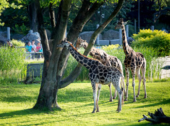 Fill up on fun and discoveries at the Granby Zoo
