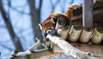 Enjoy winter at the Granby Zoo!
