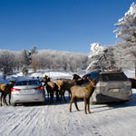 The Wonder and Magic of Winter at Omega Park