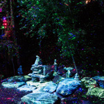 FORESTA LUMINA, the Must-see Attraction Returning to Parc de la Gorge de Coaticook